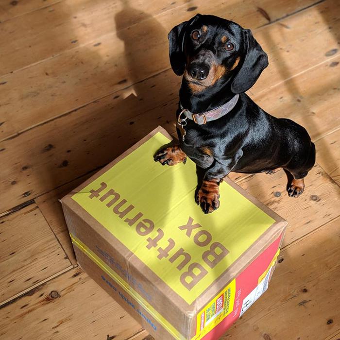 dachshund-on-butternut-box-3f9e2a5a26667c5a3f95717ac99b609ced73fae6d5453371b9d798e1fcbb04a8.jpg