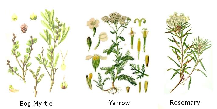 Common herbs used in Gruit
