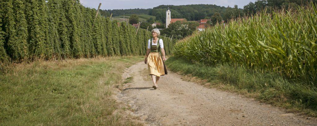 Hallertau region in Germany where one of four noble hop varieties originate