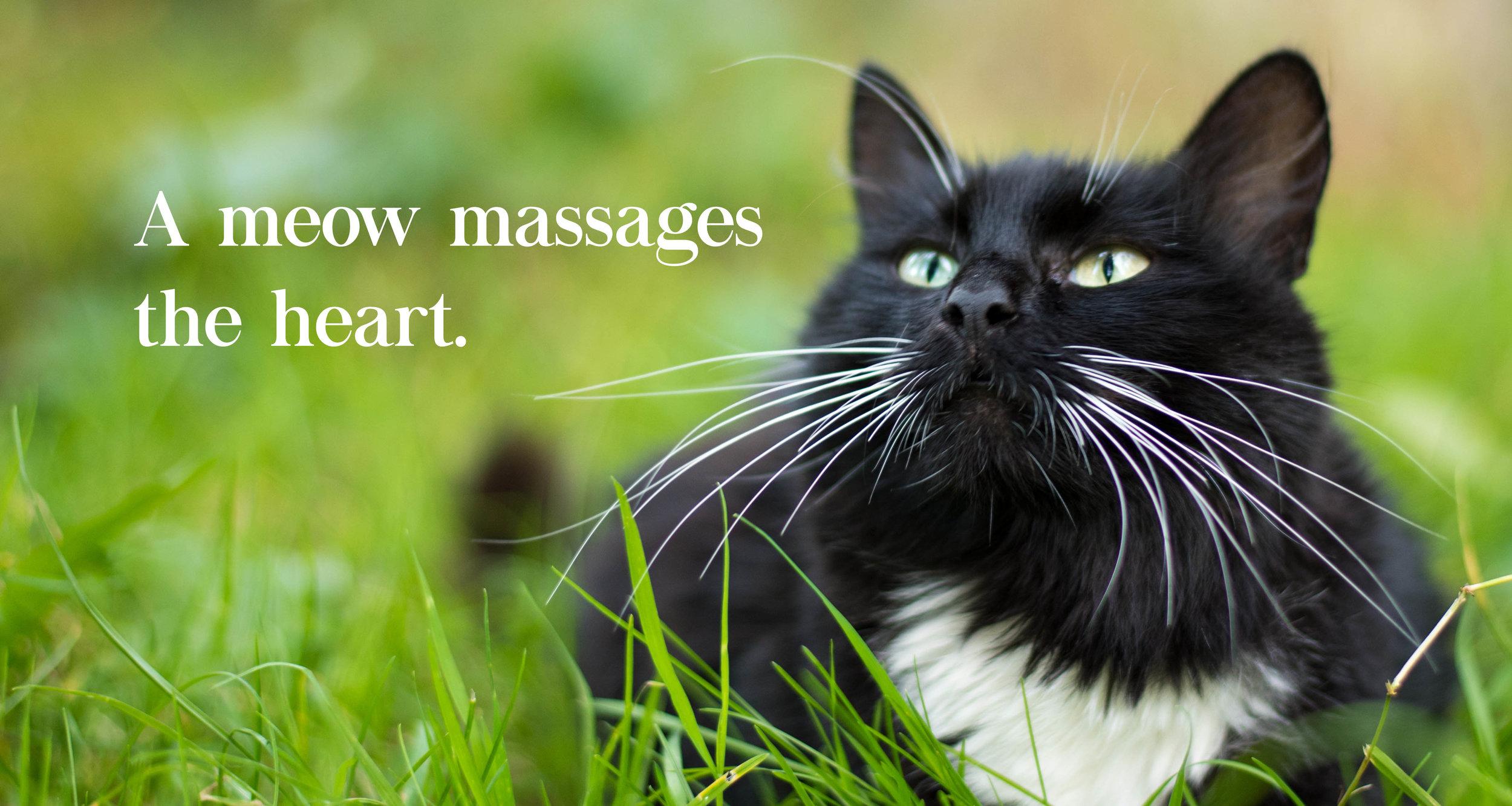 Welcome-Banner-Cat.jpg