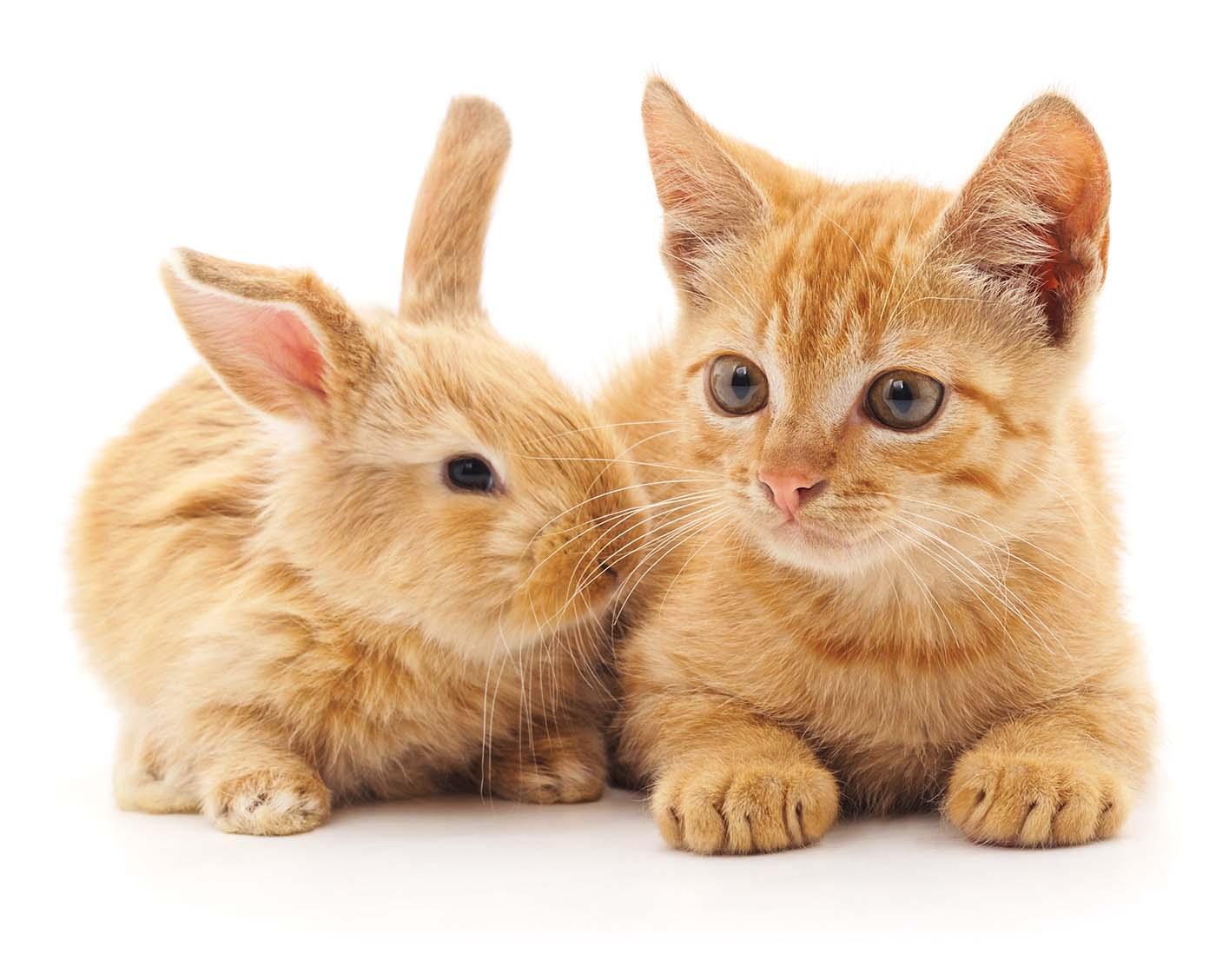 Kemptville-Rabbit-Vet.jpg