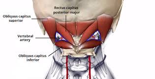 Suboccipital muscles located on the back of the head/neck