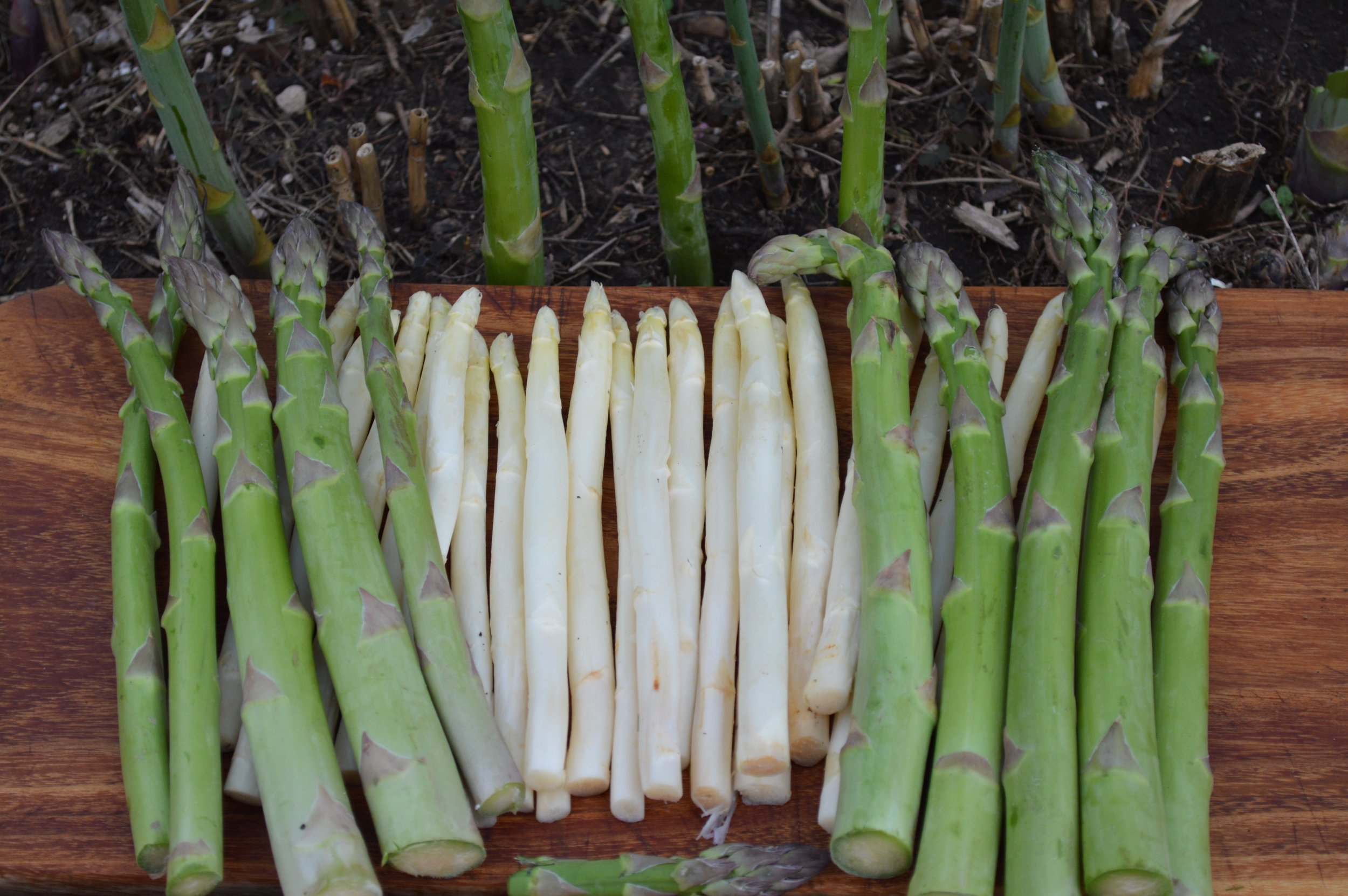 Asparagus can also be white!