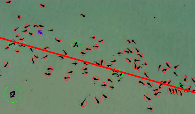 Aerial Video Data of 127 Leopard Sharks in La Jolla, California