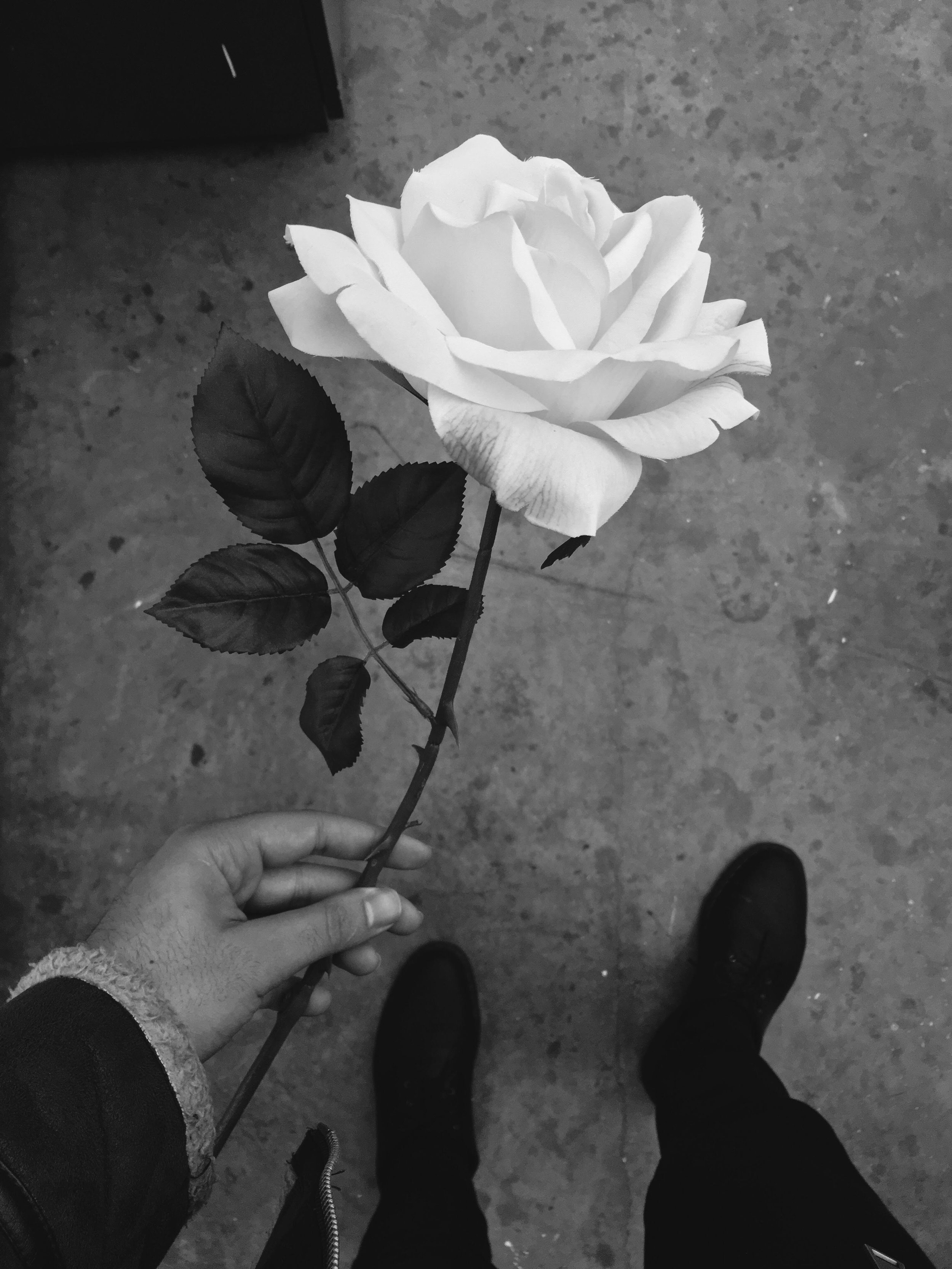 For Him flower.jpg