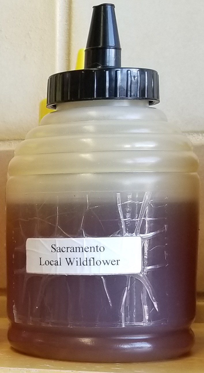 sacto wildflower honey.jpg