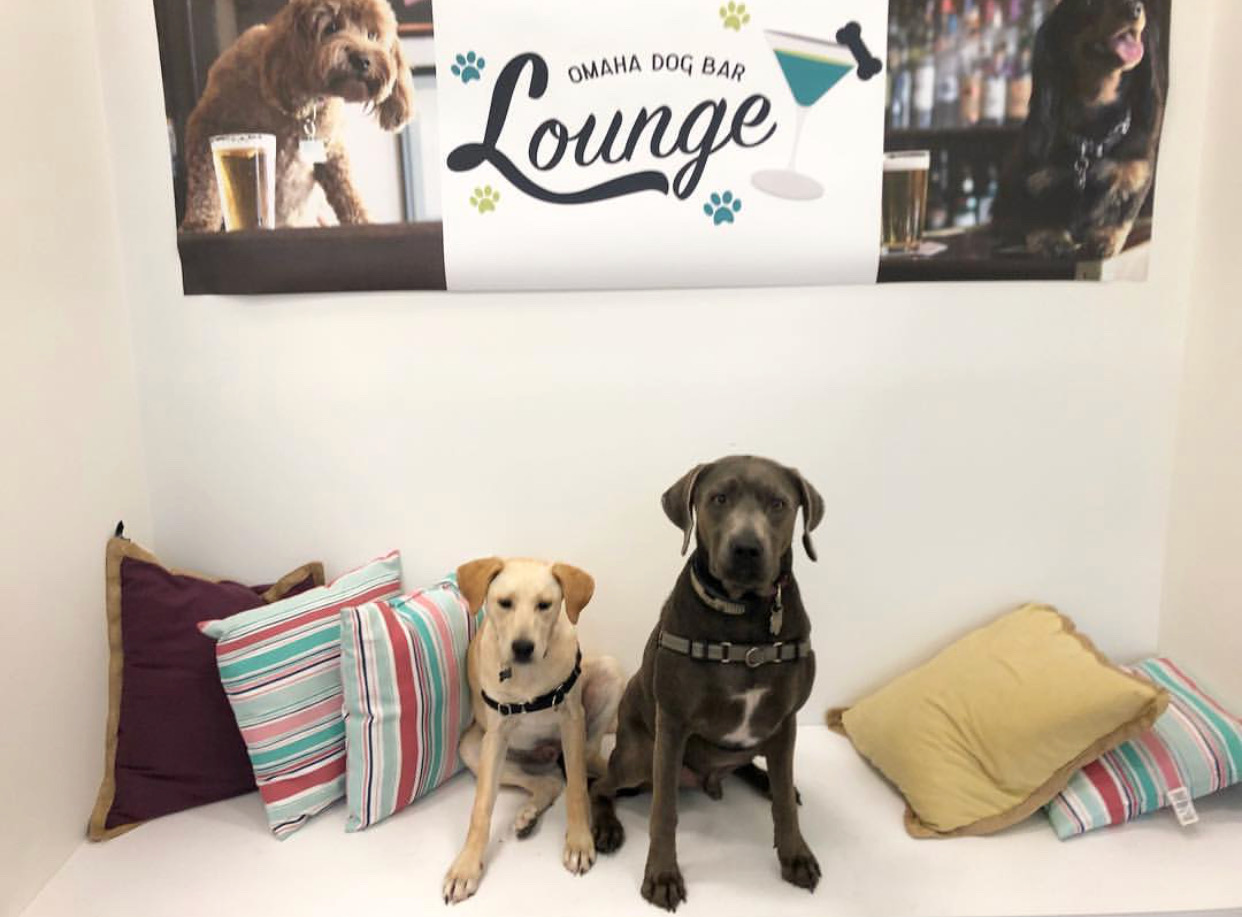 September 30th Pup-Up Event - Midtown Location