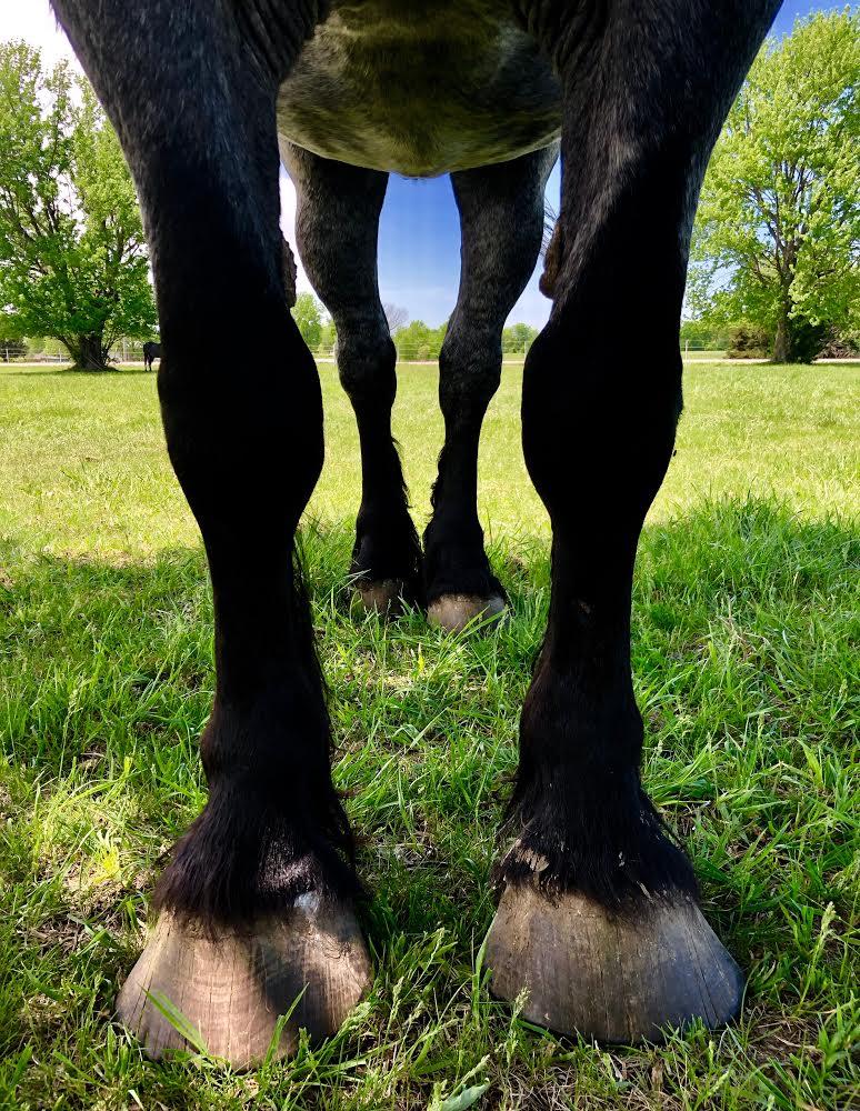 Blue's Legs.jpg