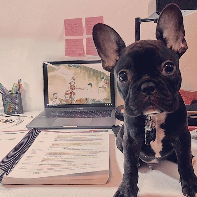 @nico.thefrenchie.pr is studying with the help of our #Sketchypharm videos!  What SketchyMedical videos are you planning to watch this weekend?