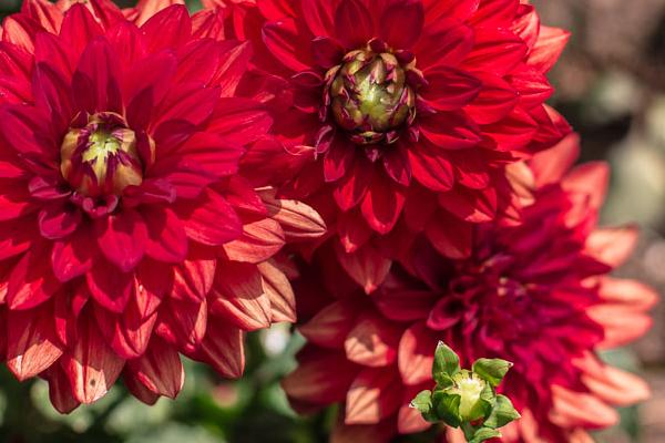 red-spike-flowers-1 edit.jpg