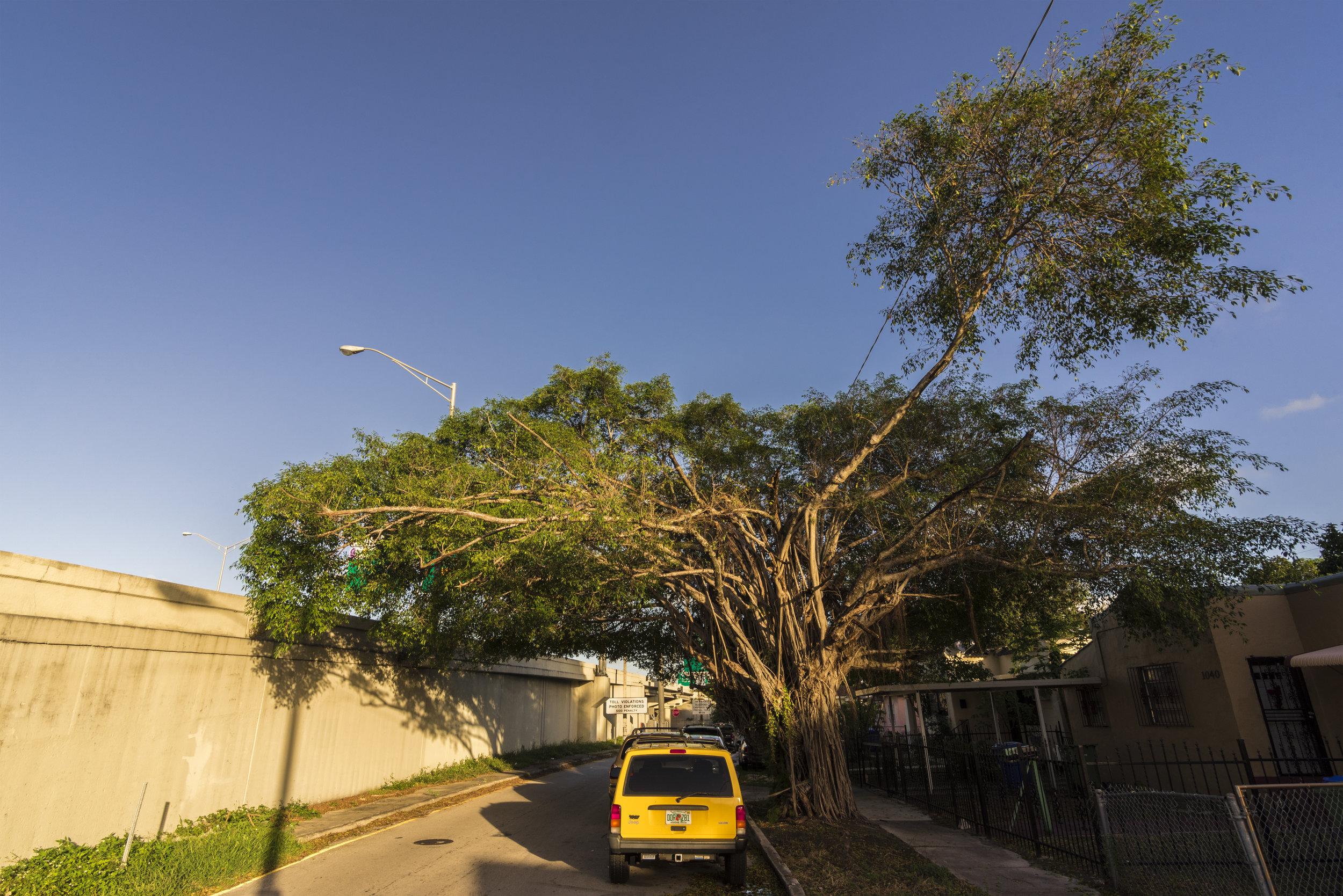 Tree_7.jpg