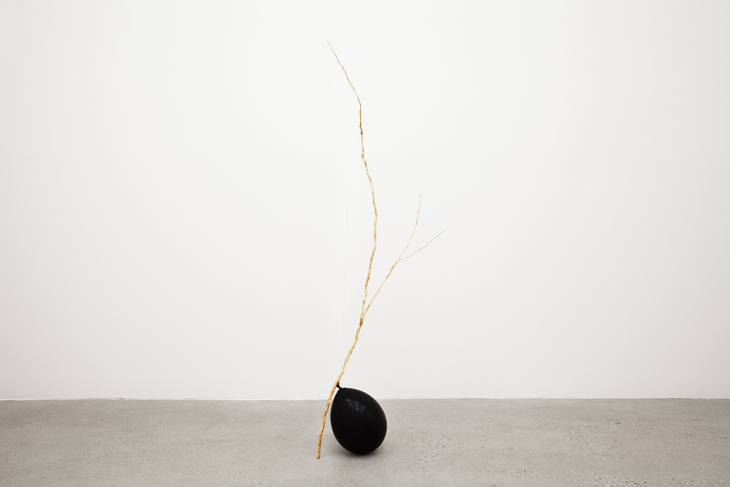 Poetry Gasping For Air , 2018, camphor tree branch, latex ballon, string, 53 x 1 in