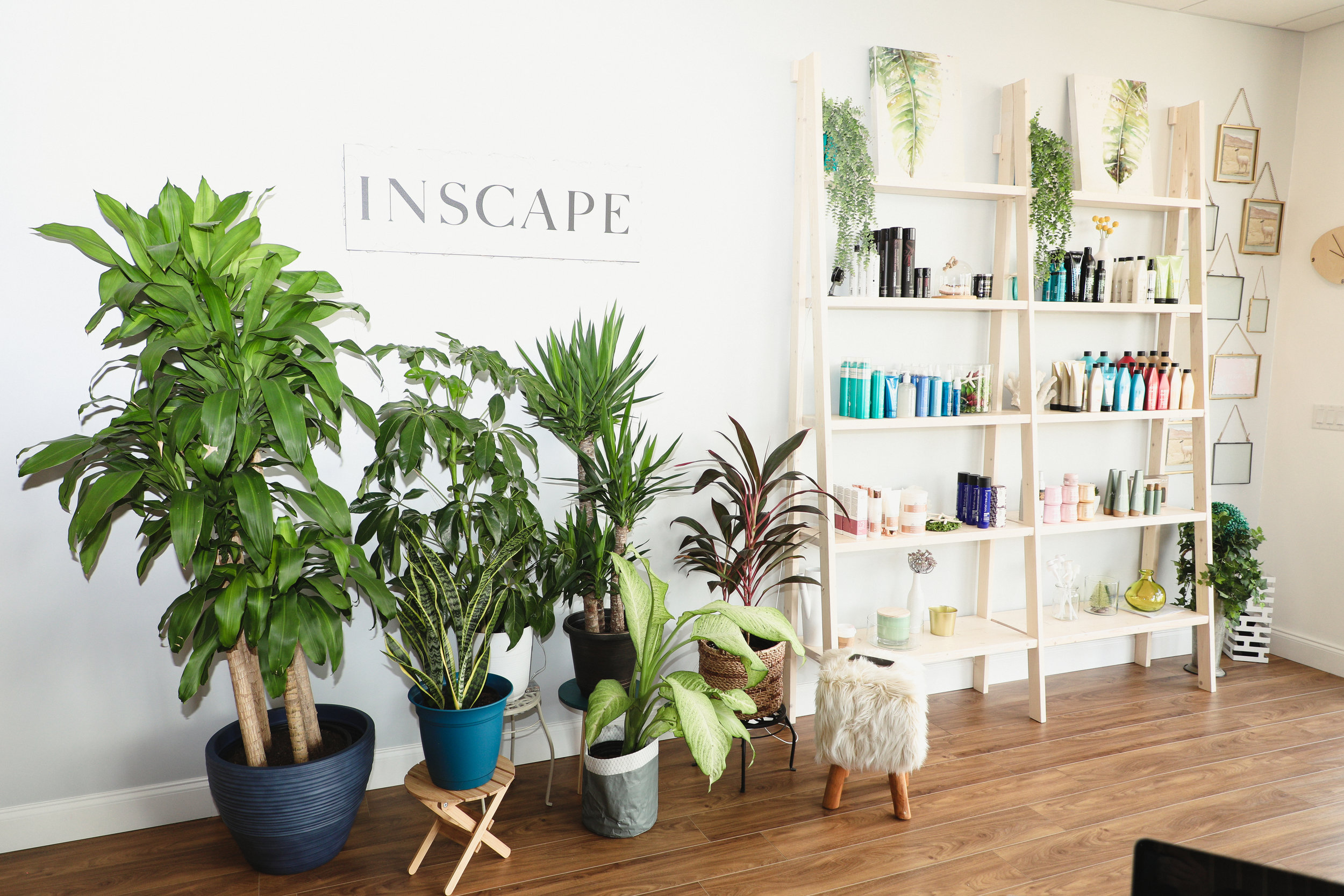 Inscape Beauty Salon - Plants & products display area.