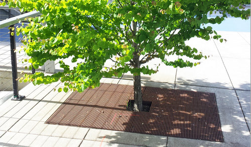 Tree Safety.jpg