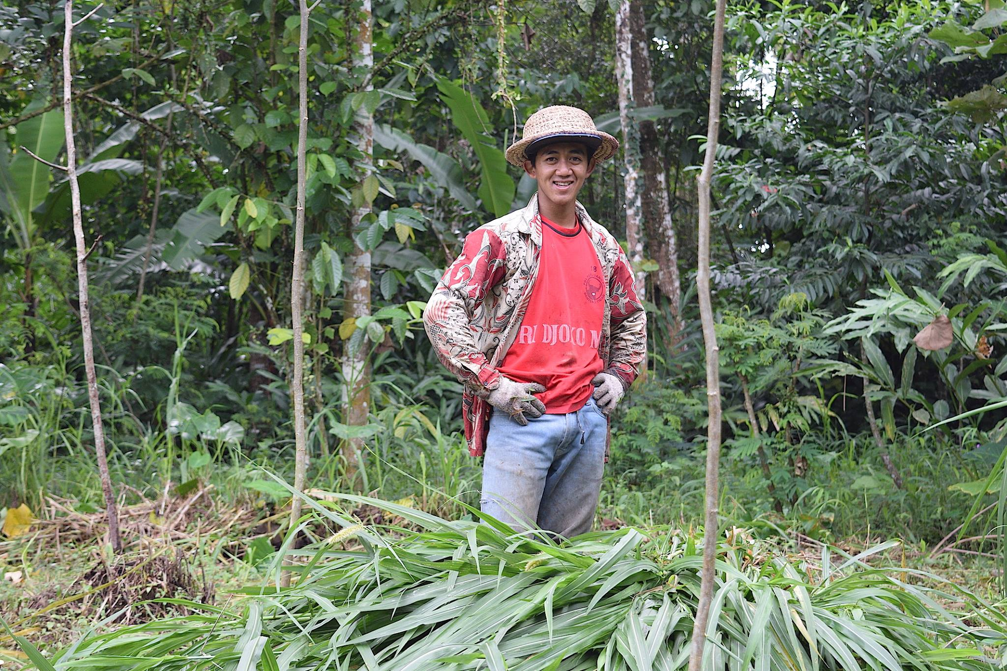 Mencari rumput pakan ternak / Collecting feed for livestock