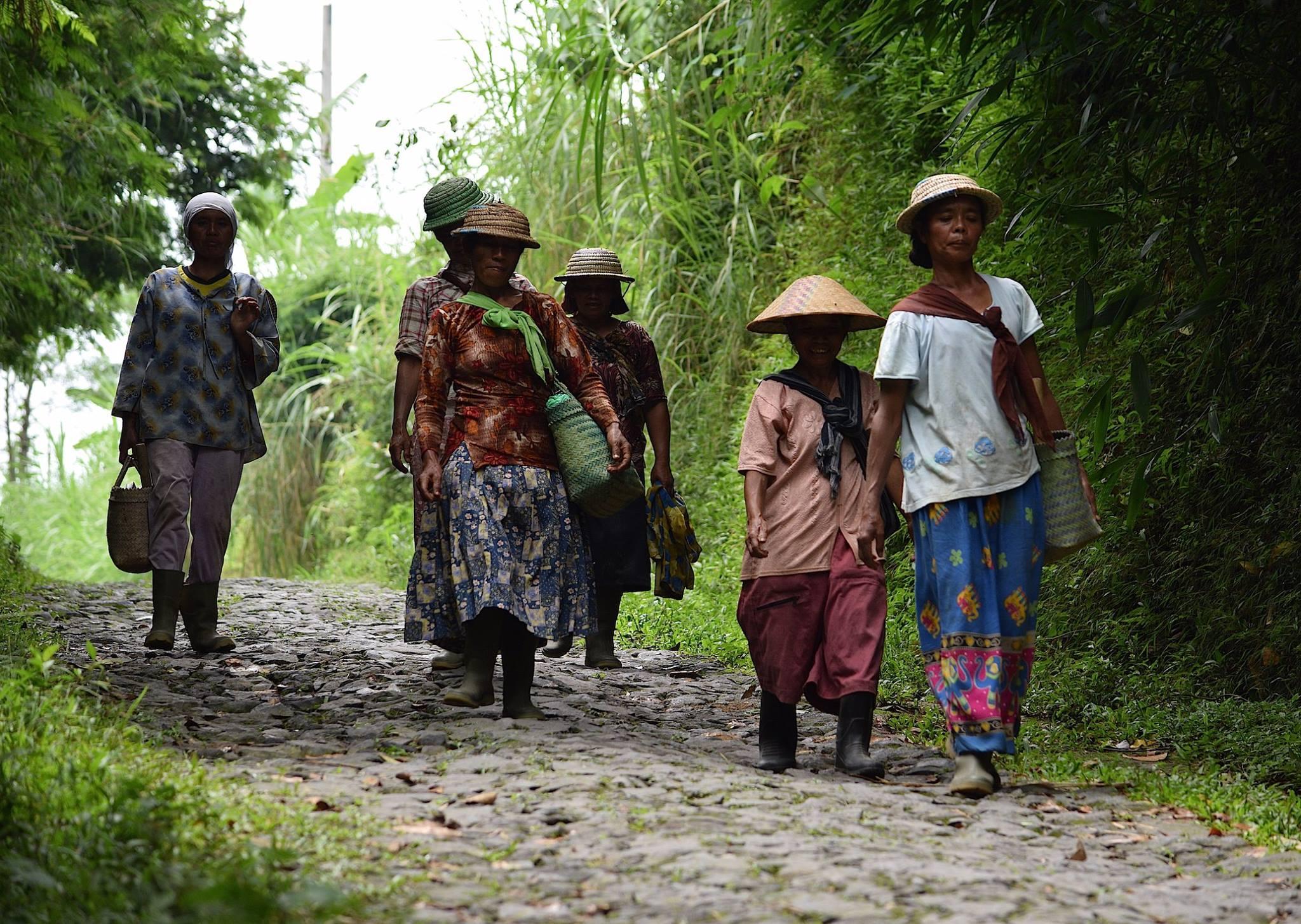Pulang dari ladang / Coming home from the farm