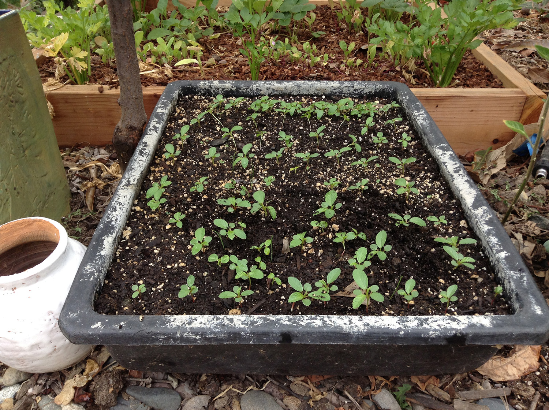 seedling in nice damp soil