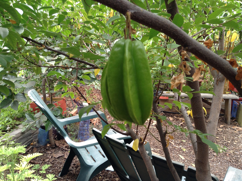 green carambola/starfruit