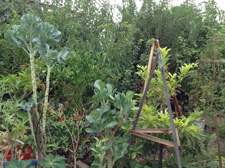 big purple kale tree to the left