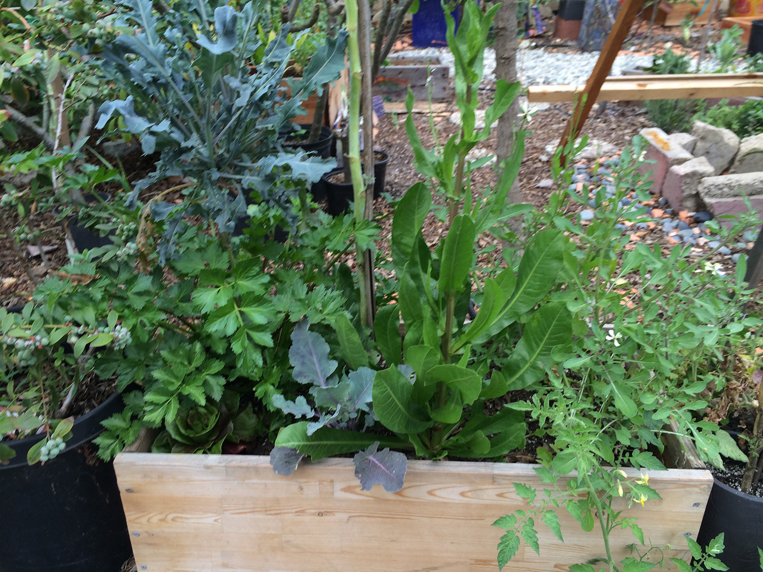 greens in a raised bed