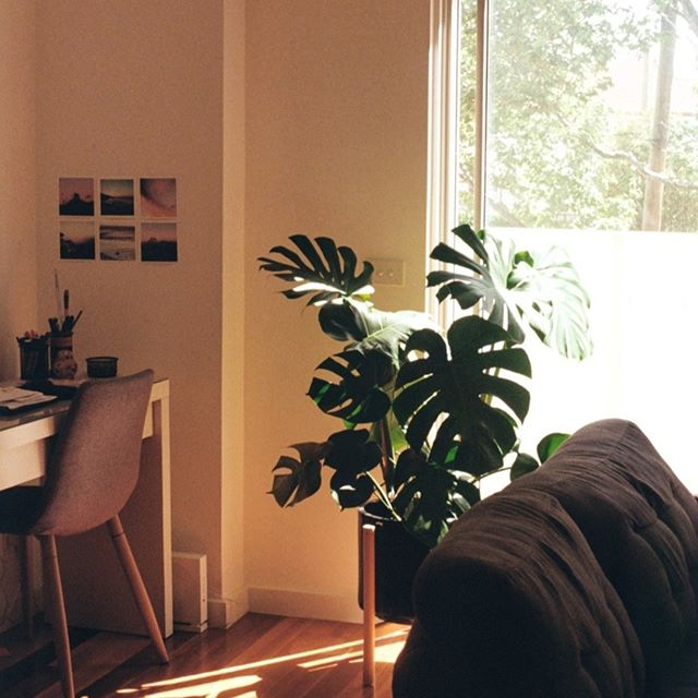How to feel healthier in winter (tip 3 of 6)⠀⠀⠀⠀⠀⠀⠀⠀⠀ We breathe a lot more indoor air in winter, so consider plants or an air purifier to keep the air in your home or office fresh and clean. Plants like Sanseveria even give out oxygen at night; a handy, natural way to decorate for your bedroom.⠀⠀⠀⠀⠀⠀⠀⠀⠀ .⠀⠀⠀⠀⠀⠀⠀⠀⠀ . ⠀⠀⠀⠀⠀⠀⠀⠀⠀ #mornington #morningtonpeninsula #beachendhealth #frankston #rosebud #mornpen #dromana #mteliza #mounteliza #mtmartha #mountmartha #moorooduc #findyourwaymorningtonpeninsula #visitmorningtonpeninsula