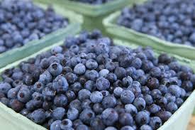 Wild Maine blueberries for CBD gummy