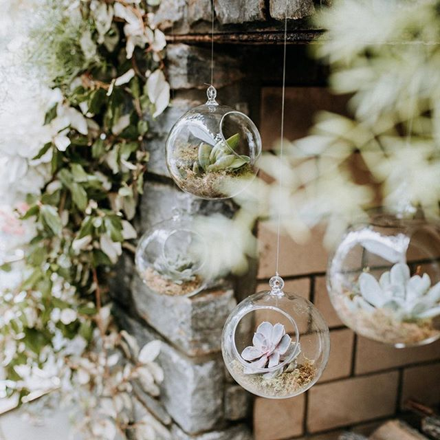 When you show up to see the most intentional details EVERYWHERE! Hanging succulents?!? What a dream!! . . . Fun fact- I cannot keep plants alive. I heard the succulent requires almost no maintenance or effort whatsoever so I thought I'd give it a try. What do you think happened to it?...😂😑 . . . . #meagencphotography #weddinginspiration #weddingdetails #weddingflorals #weddingsucculents #kentuckyweddings #kentuckyweddingphotographer #kentuckywedding #kentuckyweddingvendors #nicholasvillephotographer #kentuckyweddingphotographer #justalittleloveinspo #junebugcommunity #authenticlove #bohoweddings #authenticlovemag #lookslikefilm #lexingtonweddingphotographer  #wanderingweddings #wanderingphotographers #sharethelex #vintagelovemag #wellwed #wellwedmagazine #kybridemag #succulentdecor