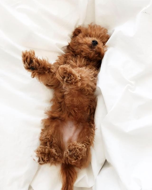 When it's #takeyourdogtoworkday but your pup needs to hit snooze for 5 more mins / 📷 @indoisyours #sleepriot . . . . . #dogsofinstagram #puppiesofinstagram #mood #weekendmood #vibes #sleepingin #pjsallday #sleepwear #loungewear #dreamteam