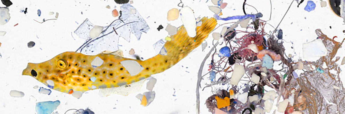 Fish and plastics - 1200 x 400 blog post pic.jpg
