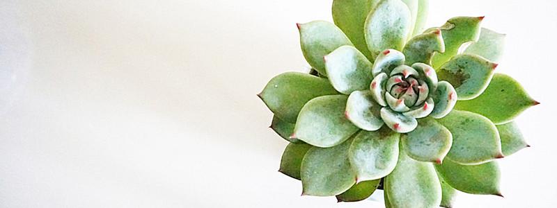 Succulent Background.jpg