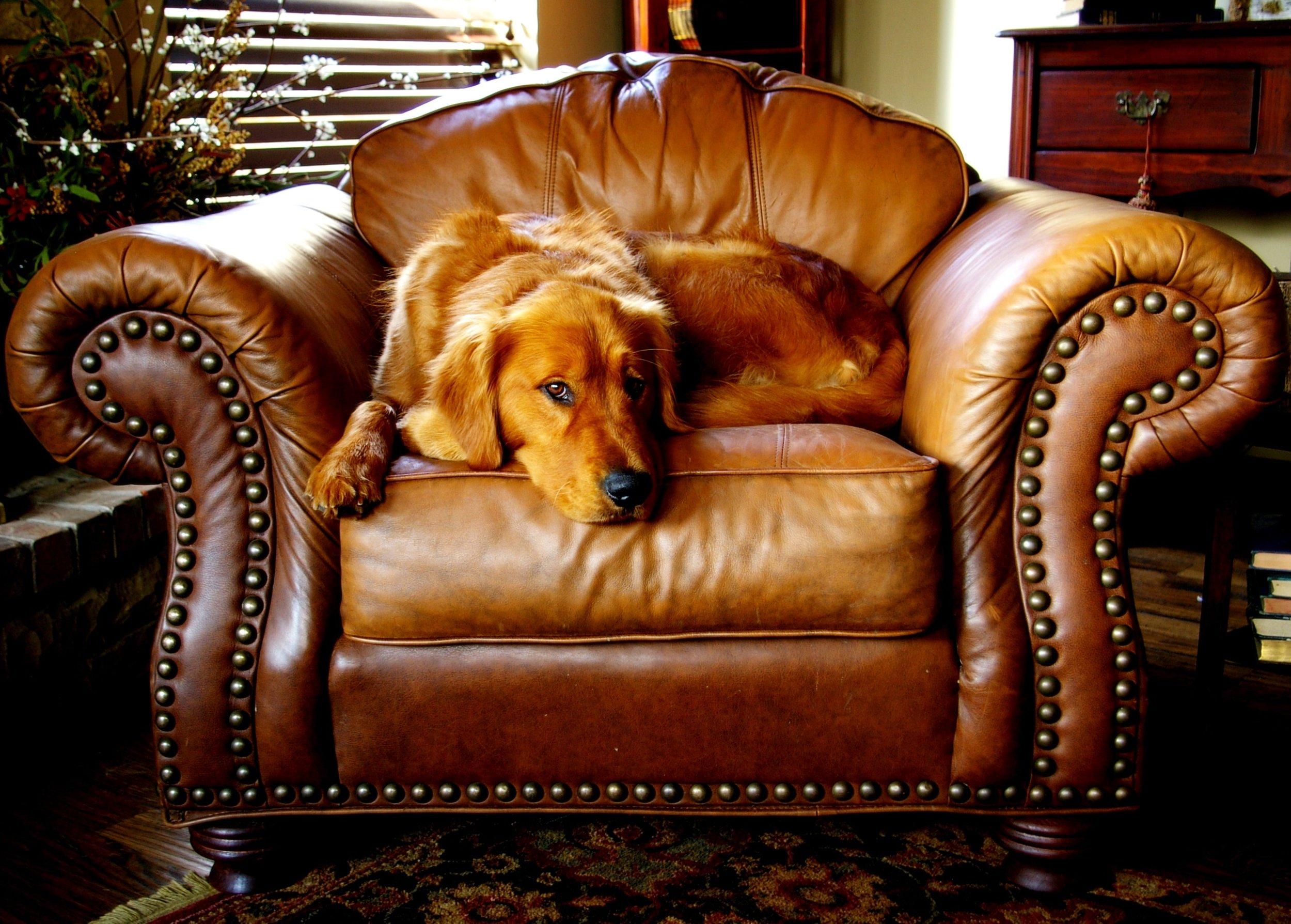 canine-chair-cushion-546228.jpg