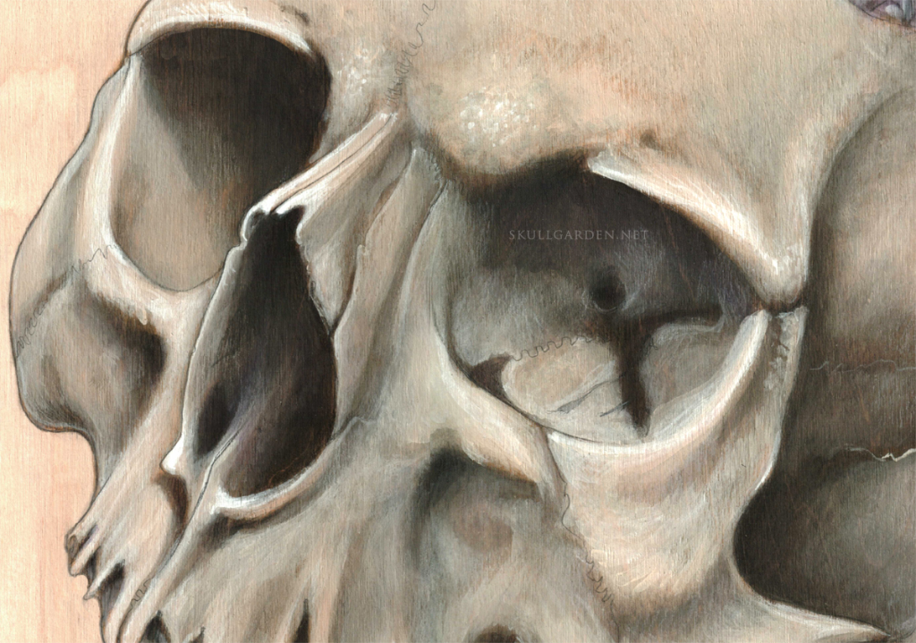 2015 laughing skull wip 2.png