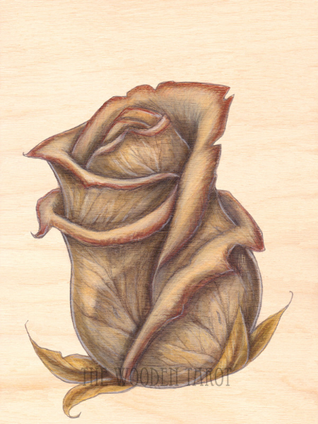 iv of blooms, 2014.