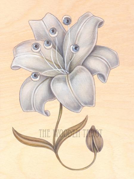 vi of blooms, 2014.
