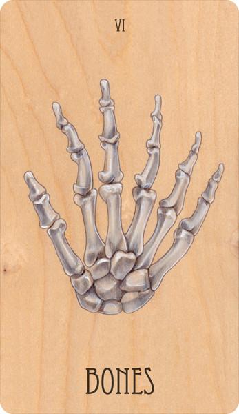 vi of bones, 2014.