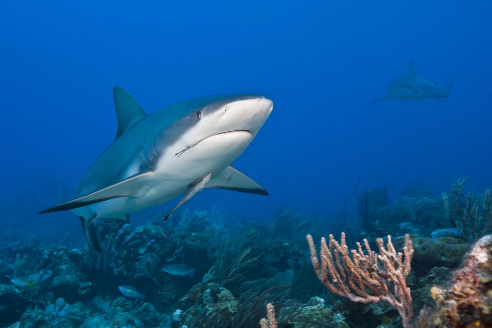 requin24.jpg