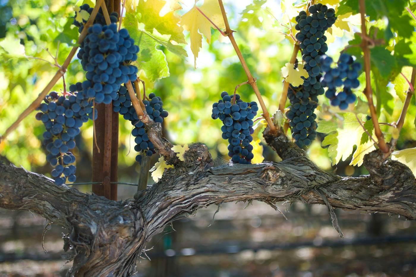 grapes5.jpg