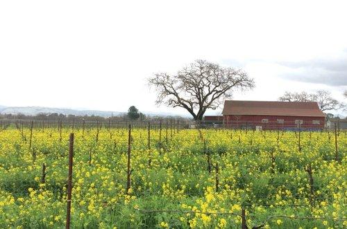 winerypaul.jpg