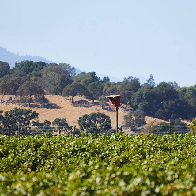 Happy Earth Day . . . . . Owl boxes are a key aspect of pest management and helping encourage biodiversity. Sustainable wine growing is one of many ways we help to take care of Mother Earth.