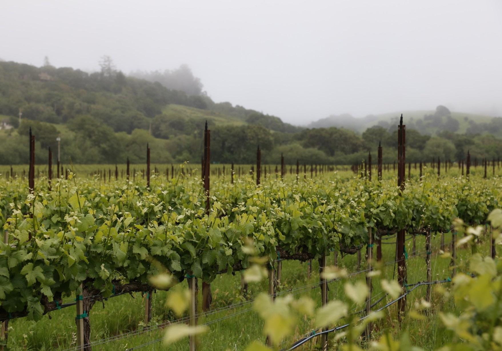 vineyard_web2.jpg