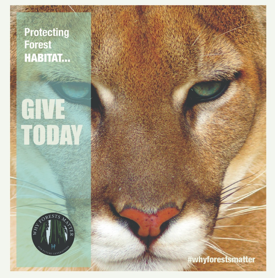 Giving_Tuesday_Lion.jpg