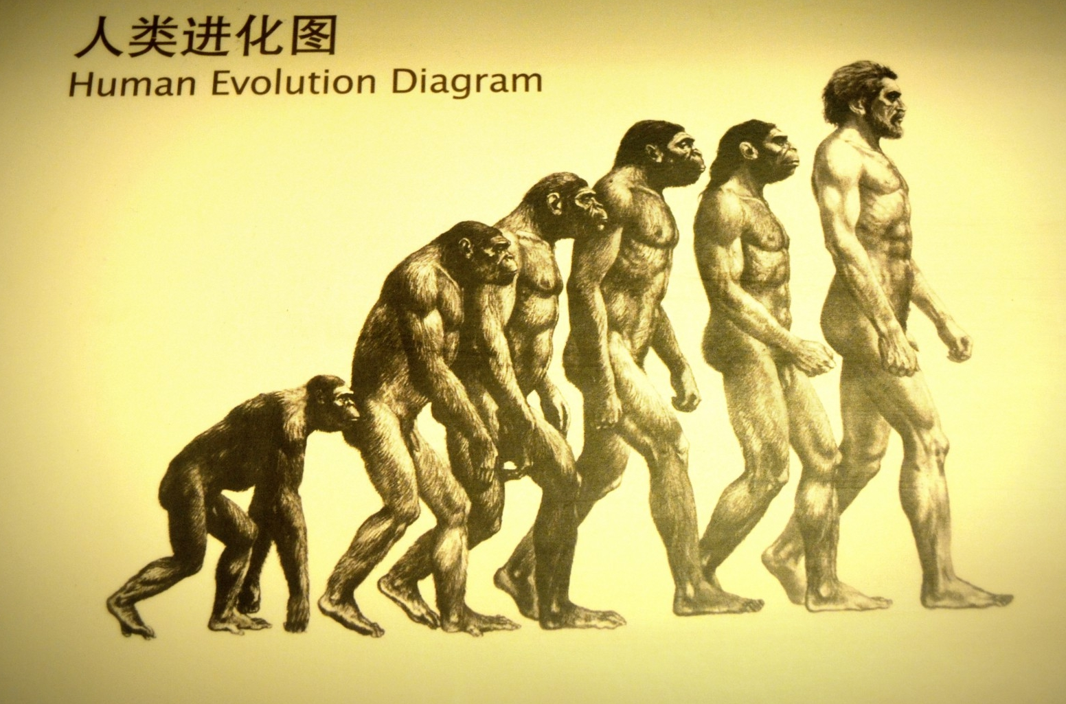 human-evolution.jpeg