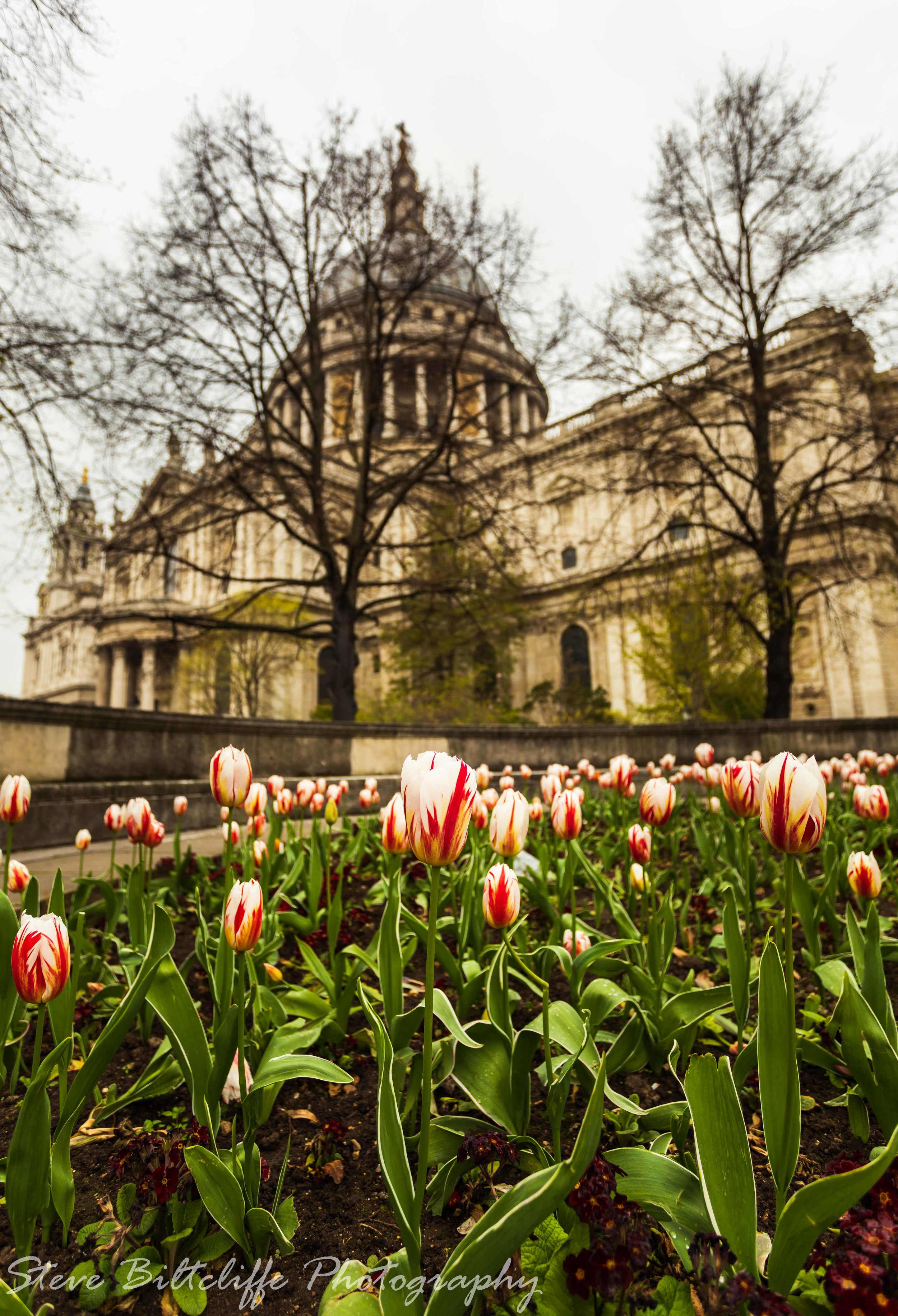 Tulips outside St.Pauls