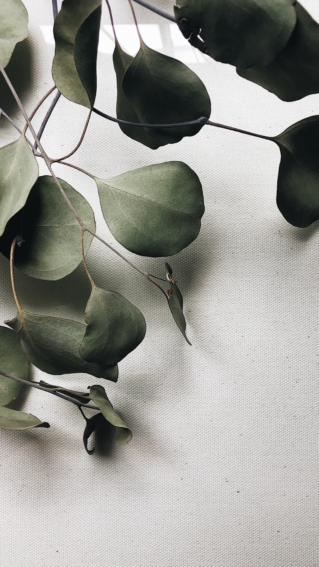 Botanicals -