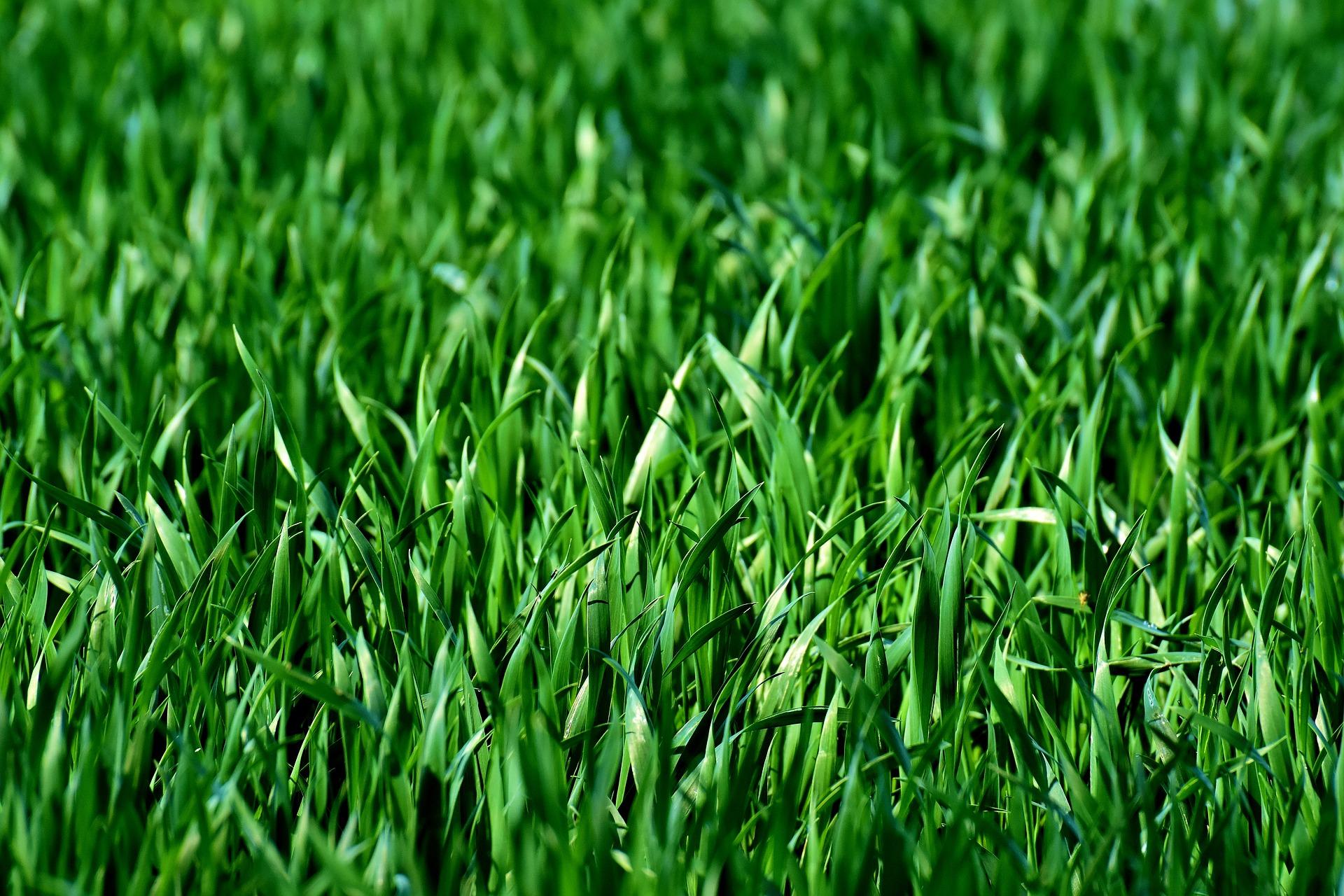 Grass-3375052_1920.jpg