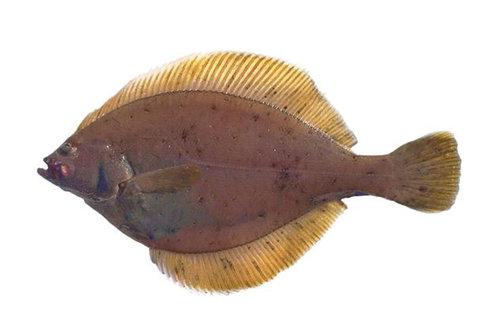 yellowfin-sole.jpg