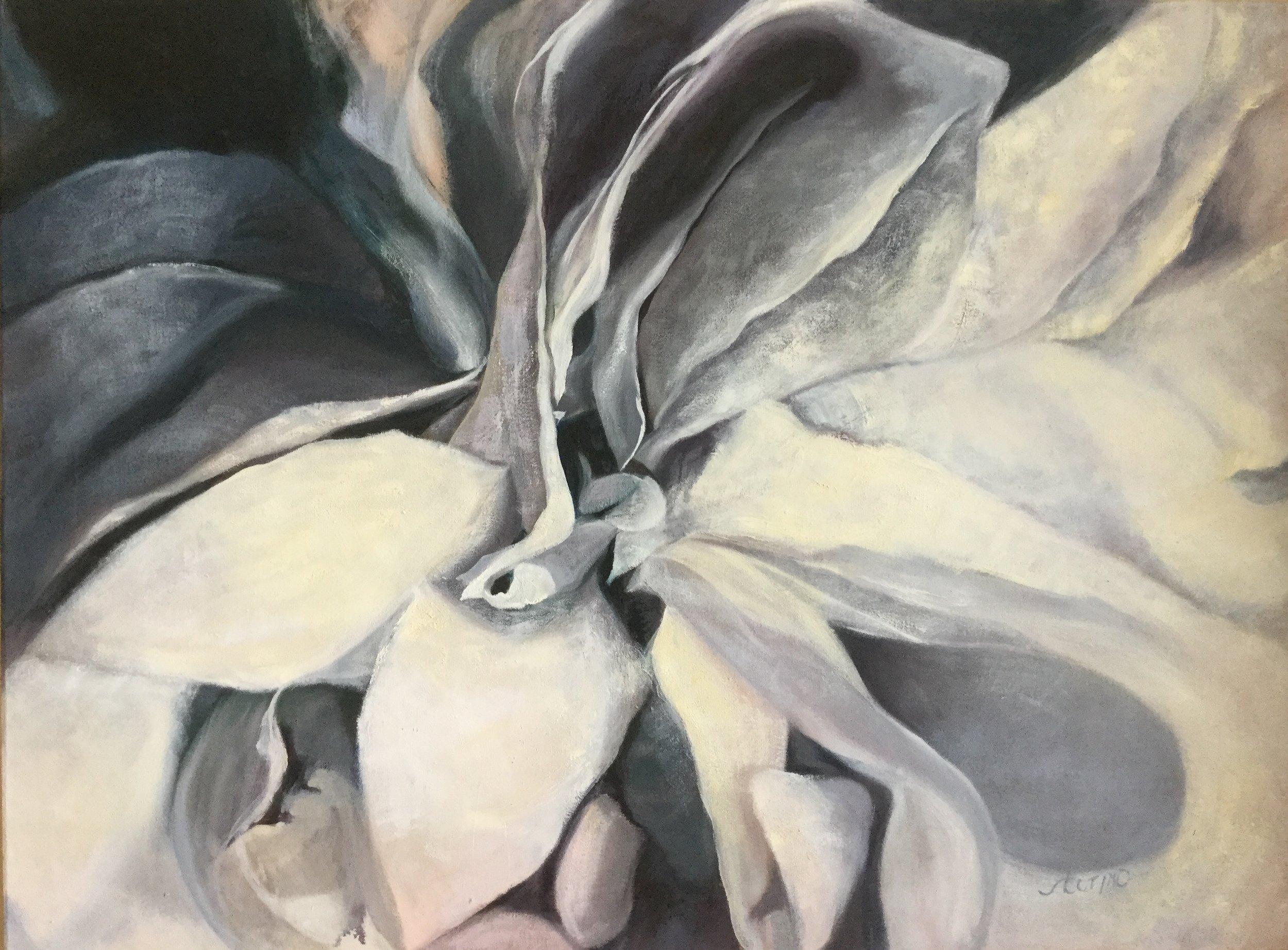 White rose 2.JPG