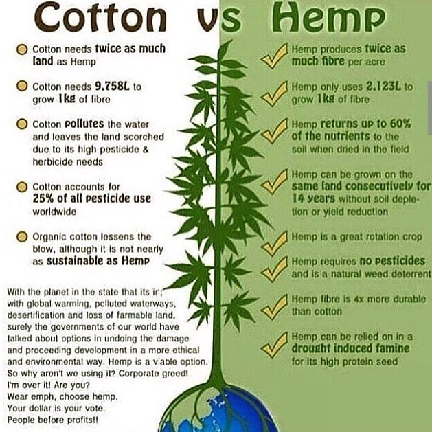 Think Green 🤔🌳 #hemp #cotton #industrialhemp #hempfiber #ecofriendly #sustainability #green #hempway