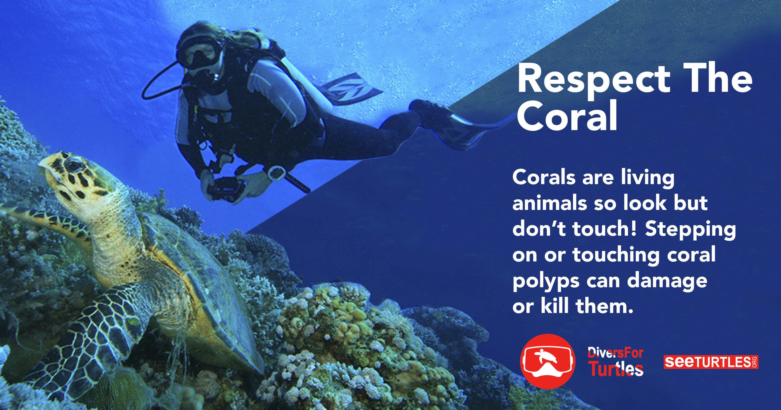 Tip-Coral FB.jpg