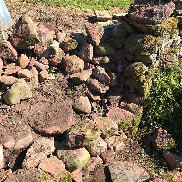 Lovely day rebuilding parts of a drystane dyke for a client. Hadn't been very well built to begin with, so no real surprise it collapsed. These sections should be around long after the rest has fallen down!  #drystanedyke #dumfries #dumfriesandgalloway #sandstone #availableforwork
